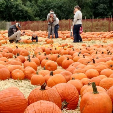 6 Exciting Things To Do & Eat Between October 13th-October 17th
