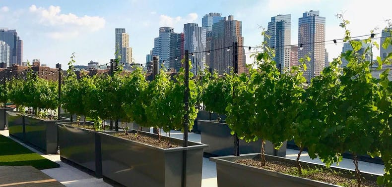 7 Vineyards To Check Out Within 90 Minutes Of NYC