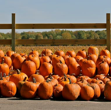 Where To Do Fall Stuff Within 90 Minutes Of Chicago