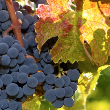 Where To Eat & Drink Wine In St. Helena feature image