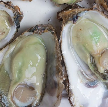 Richard Haward's Oysters feature image